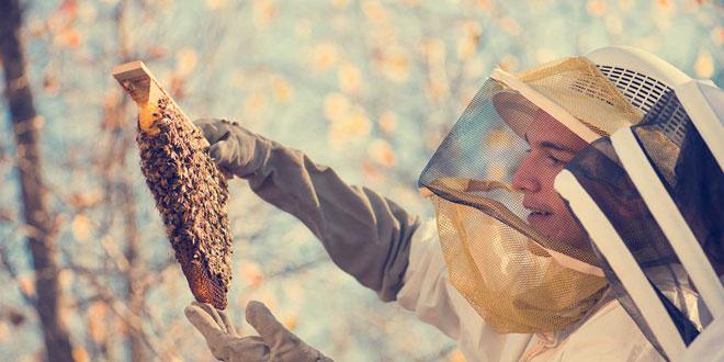 Ξεκινώντας με τη Μελισσοκομία – Μελισσοκομία Ι