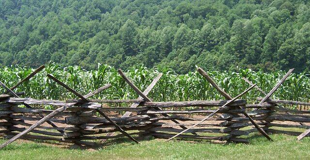 Νέα ρύθμιση για αγροτεμάχια εντός δασικών χαρτών