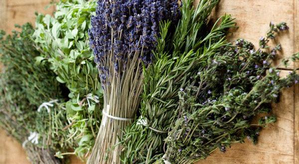 Η εκμετάλλευση των φαρμακευτικών φυτών ως «επενδυτική ευκαιρία»