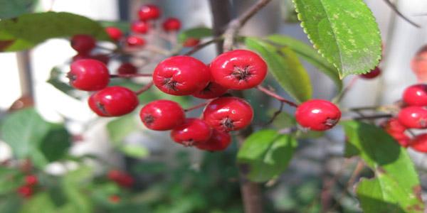 Νέες Καλλιέργειες/Ενεργειακά Φυτά