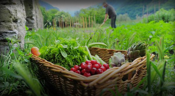 Φυτοπροστασία Βιολογικών Καλλιεργειών