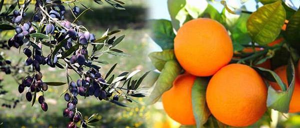 Οδηγίες λίπανσης για ορισμένες από τις κυριότερες καλλιέργειες