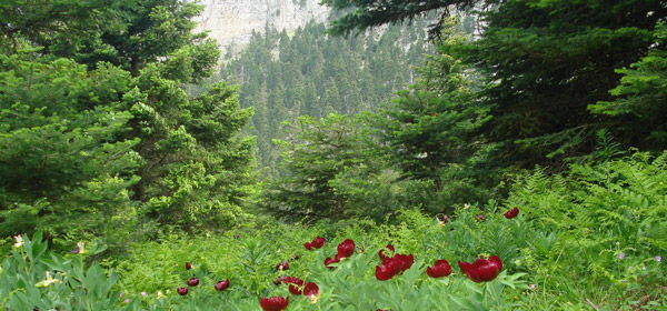 Δ/νση Δασών Κυκλάδων: Ανάρτηση Δασικού Χάρτη – Υποβολή αντιρρήσεων