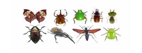 Όλο και λιγότερα έντομα – Πιο αισθητή η μείωση μετά το 2005