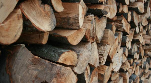Ημερίδα για την πιστοποίηση της αειφορικής διαχείρισης των ελληνικών δασών και των προϊόντων ξύλου