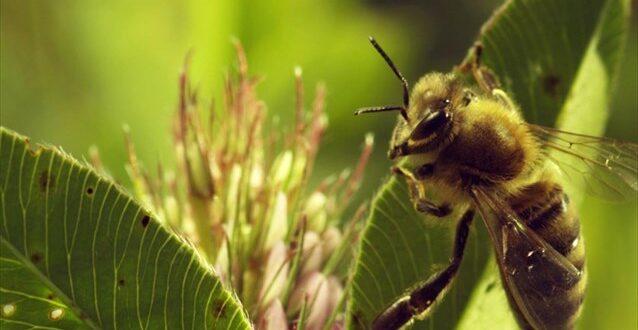 Μέτρα προστασίας των μελισσών από τα γεωργικά φάρμακα