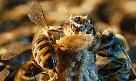 Το μέλι κλείνει τις πληγές