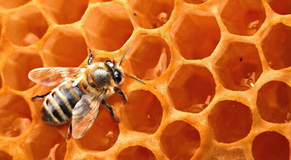 Χωρίς τις μέλισσες δεν θα υπάρχει και τροφή