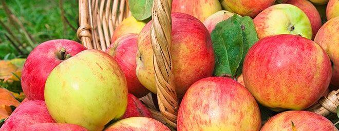 «Τρώμε σλοβενικά μήλα», το σύνθημα των Σλοβένων παραγωγών