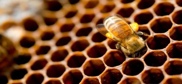 Μάρκετινγκ Μελιού/Μελισσοκ. Προϊόντων