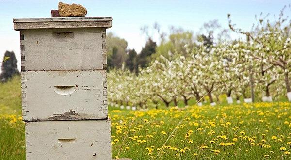 Ενισχύσεις για την αγορά κυψελών και τις μετακινήσεις μελισσοσμηνών