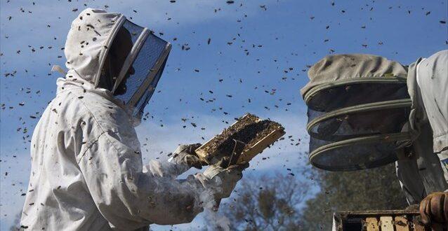 Εκπαίδευση μελισσοκόμων από τον ΕΛΓΟ – ΔΗΜΗΤΡΑ