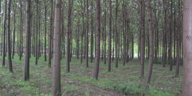 Ν. Λάρισας: Η μεγαλύτερη έκταση δάσωσης γεωργικών γαιών με 50.000 στρ.