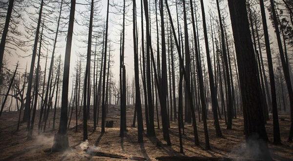 Πολύ υψηλός κίνδυνος πυρκαγιάς για την Παρασκευή – Ο χάρτης πρόβλεψης
