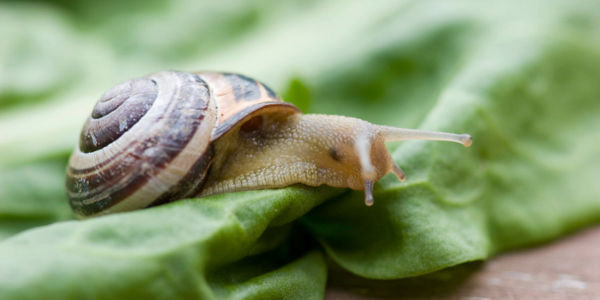 Eκτροφή σαλιγκαριών: Κάτι μαγικό;