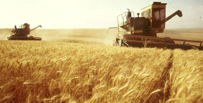 Μειωμένη παραγωγή σιταριού εξαιτίας των ακραίων καιρικών φαινομένων