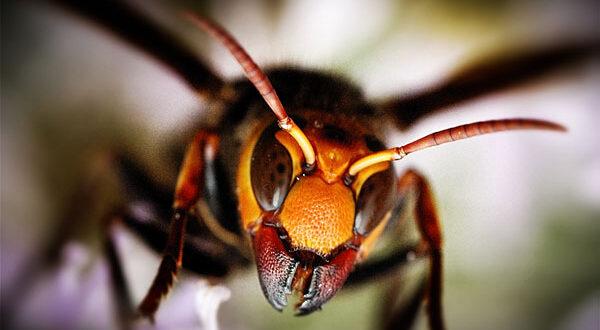 Γερμανία: Σκότωσες σφήκα; 5.000 ευρώ!