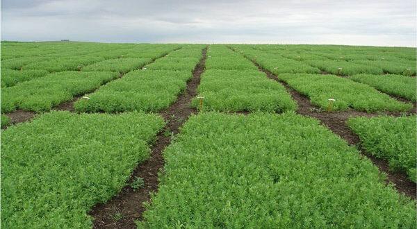 Συνδεδεμένη ενίσχυση στον τομέα σπόρων σποράς – Τα επιλέξιμα είδη