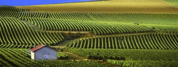 Γαλλία: Ο παραγωγός βιολογικών κρασιών, το κιτρίνισμα της αμπέλου και η απειλή του προστίμου