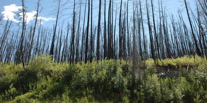 Πολύ υψηλός κίνδυνος πυρκαγιάς αύριο Τρίτη σε Μεσσηνία και Λακωνία