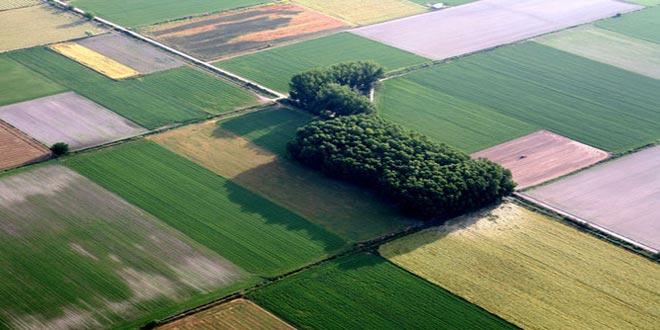 Διάθεση αγροτεμαχίου για πειραματικές εργασίες του ΕΛΓΟ-ΔΗΜΗΤΡΑ