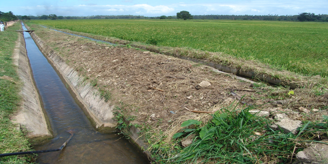 Ρόδος: Η παρατεταμένη ανομβρία πλήττει ελαιοπαραγωγούς και κτηνοτρόφους