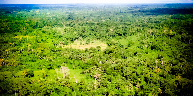 Η Νορβηγία προστατεύει τα δάση της δυτικής Αφρικής