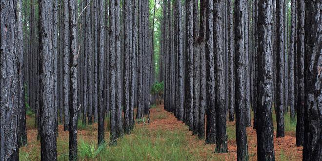 Ημερίδα για την πιστοποίηση της αειφορικής διαχείρισης των ελληνικών δασών και των προϊόντων ξύλου στην Πάτρα