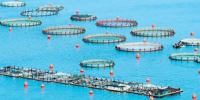 Η βιώσιμη ιχθυοκαλλιέργεια υποκαθιστά την αλιεία