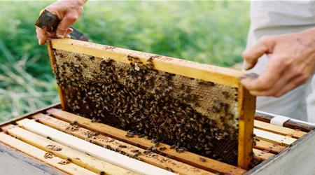Ενισχύσεις 19,9 εκατ. € στους τομείς μελισσοκομίας και χοιροτροφίας