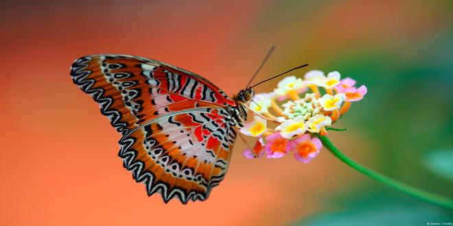 Φουκουσίμα: Οι πεταλούδες «δείχνουν» τις επιπτώσεις στη χλωρίδα και την πανίδα