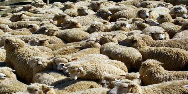 Ενισχύσεις για την προμήθεια ζωοτροφών για περίοδο 100 ημερών