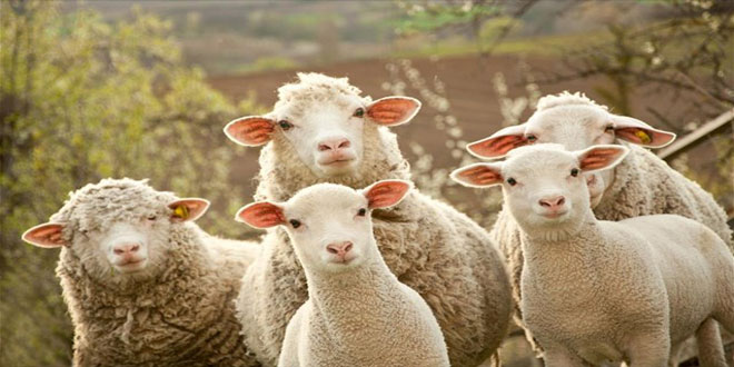 Αιγοπρόβατα στον Πύργο του Άιφελ