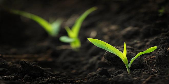Οι σπόροι προσαρμόζονται στις θερμοκρασίες περιβάλλοντος