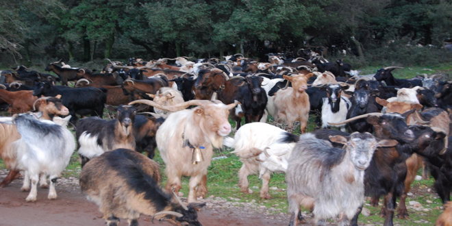 Κρατικές ενισχύσεις σε κτηνοτρόφους – Δικαιούχοι και ύψος ενίσχυσης