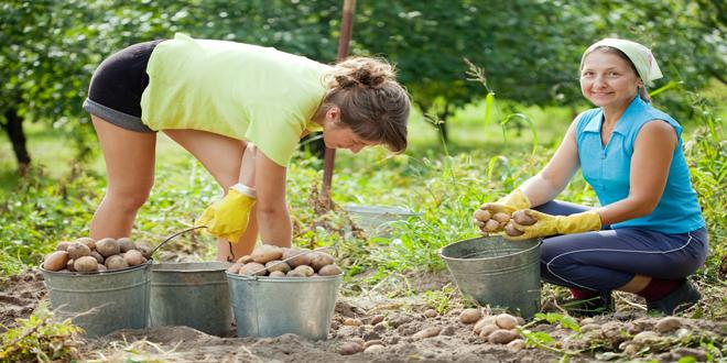 Θα μπορούσαν οι βιολογικές καλλιέργειες να αντικαταστήσουν τις συμβατικές;