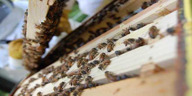Εκπαιδεύσεις μελισσοκόμων μέσω της Δράσης 1.3 του Προγράμματος Μελισσοκομίας