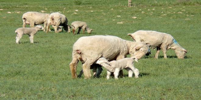 Οι 5 δεσμεύσεις του ΥπΑΑΤ για τους κτηνοτρόφους-Τι προβλέπεται για τους βοσκότοπους