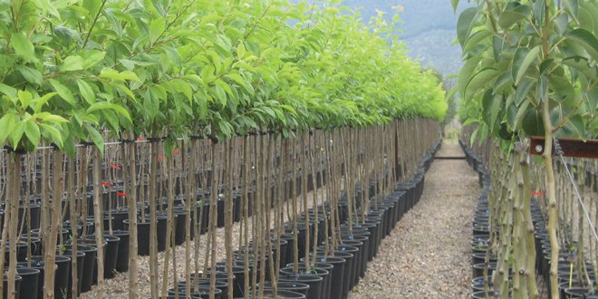 Διάθεση δασικών φυτών από το Δημόσιο Δασικό Φυτώριο Χανίων