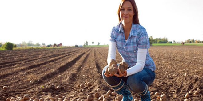 Παραχώρηση γεωργικών εκτάσεων σε κατά κύριο επάγγελμα αγρότες και ανέργους