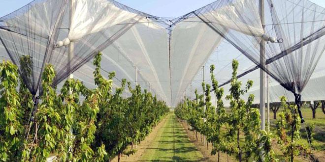 Υπομέτρο 5.1: Χρηματοδότηση επενδύσεων για την προστασία των καλλιεργειών – Παράταση στην υποβολή των αιτήσεων