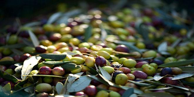 Γερμανοί εισαγωγείς σε ελληνικές μονάδες παραγωγής γεωργικών προϊόντων