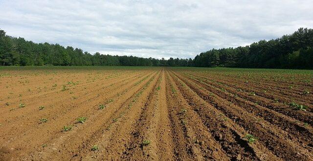 Συμβατικές πρακτικές καλλιέργειας και οι απώλειες του γόνιμου εδάφους