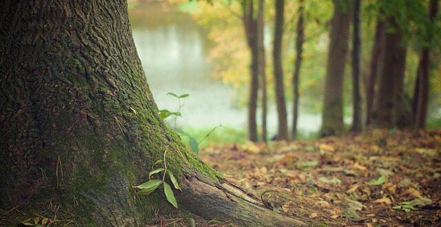Δ/νση Δασών Κοζάνης: Ανάρτηση Δασικού Χάρτη – Υποβολή αντιρρήσεων