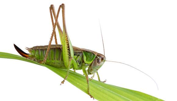 Τα έντομα δεν αποτελούν ακόμα την «πράσινη» εναλλακτική για τη διατροφή μας