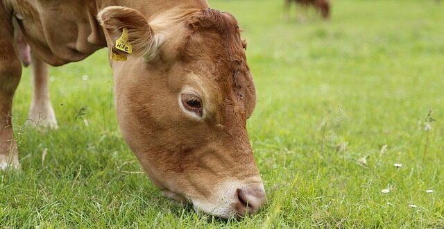 Πληρωμές για δράσεις βιολογικής κτηνοτροφίας – Σε ποιες Περιφέρειες