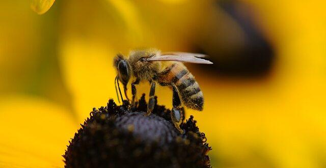 Πρόγραμμα Μελισσοκομίας: Αιτήσεις έως 20 Οκτωβρίου για τη Δράση 6.1 «Εφαρμοσμένη Έρευνα»