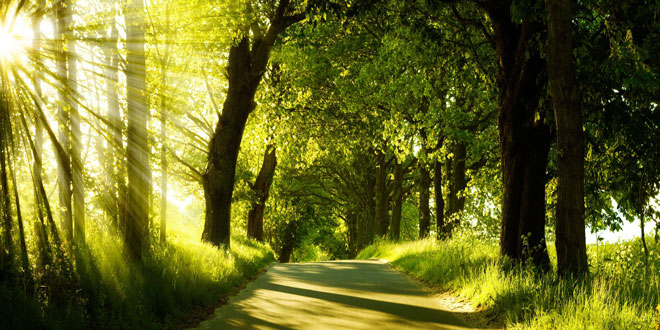 Μισή ώρα στο πάρκο είναι αρκετή για τη ψυχική και τη σωματική μας υγεία