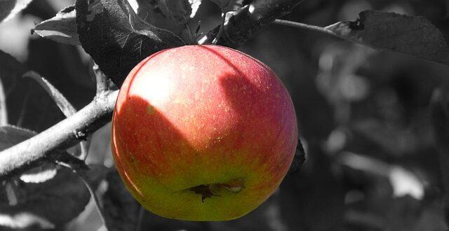 Γερμανία: Προς αναζήτηση σπάνιων φρούτων
