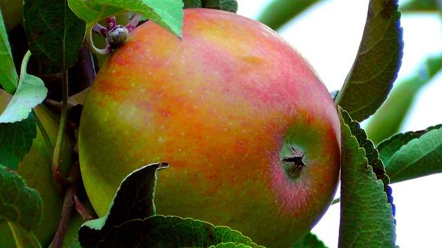 μηλα 2